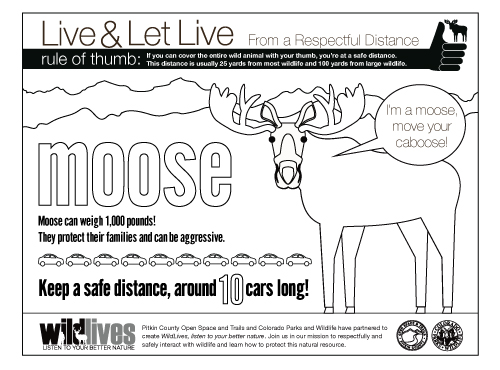 Download the Moose Coloring Book